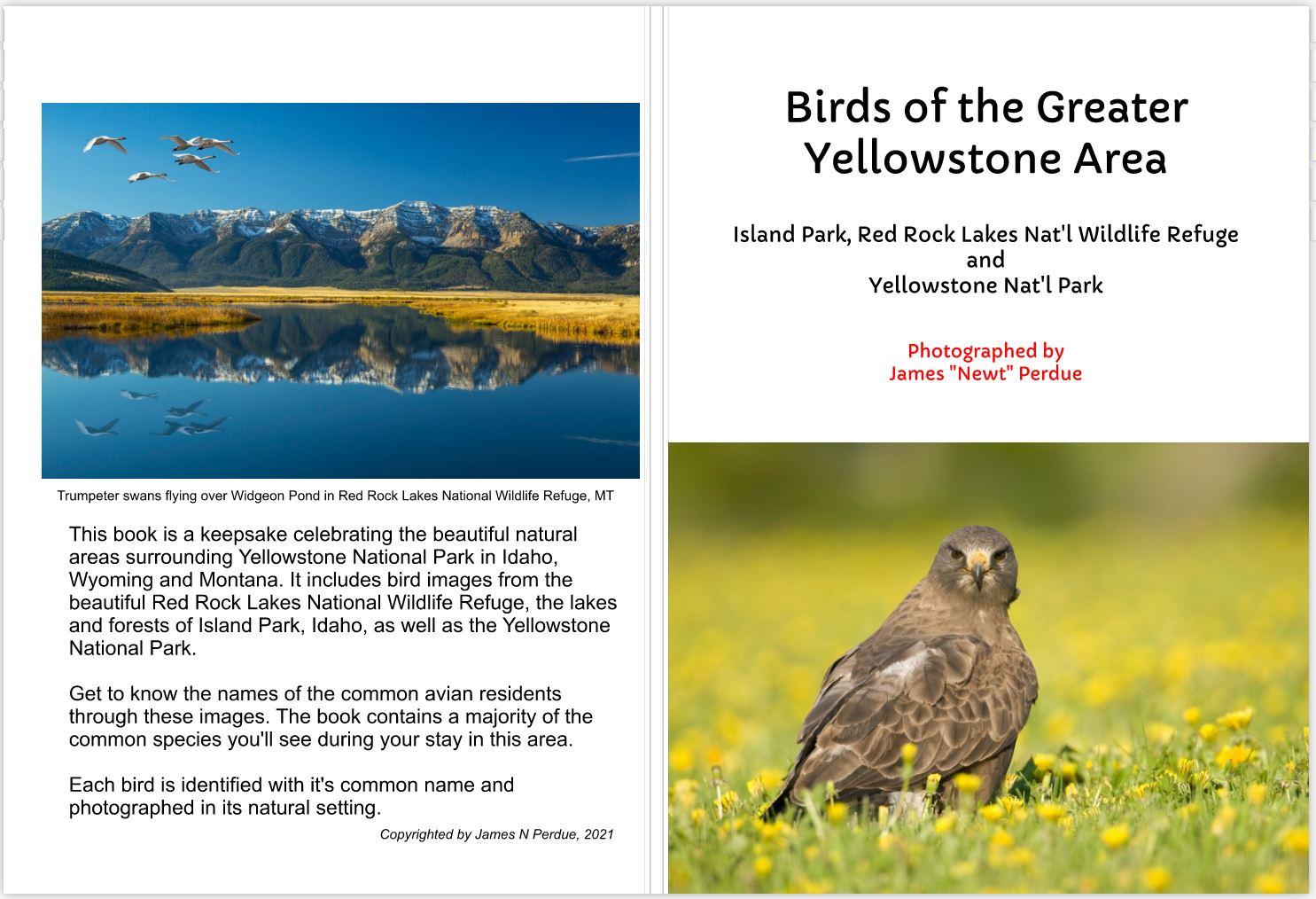 GreaterYellowstoneBirds
